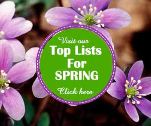 Spring Top Lists 05-2018