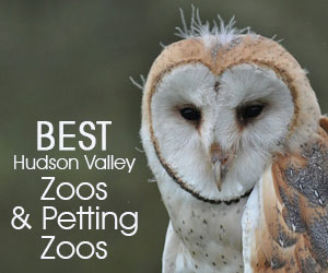 Best HV Zoos June 18