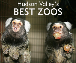 Best HV Zoos JUL 18