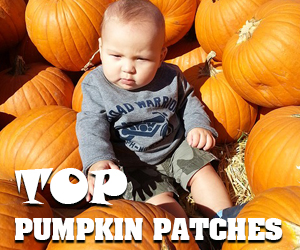 U-pick pumpkin patches NOV18