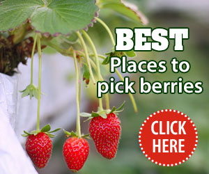 Pick your own berries Jun19