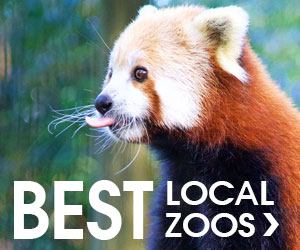 Hudson Valley's best zoos Jun19