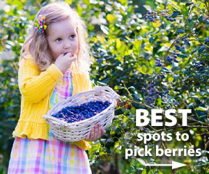 Best places to pick berries
