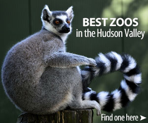 Best zoos in the Hudson Valley