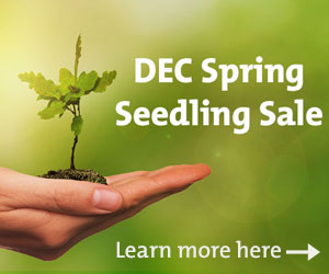 DEC seedling sale