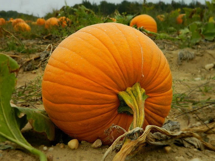 2015 Top Pumpkin Patches In The Hudson Valley