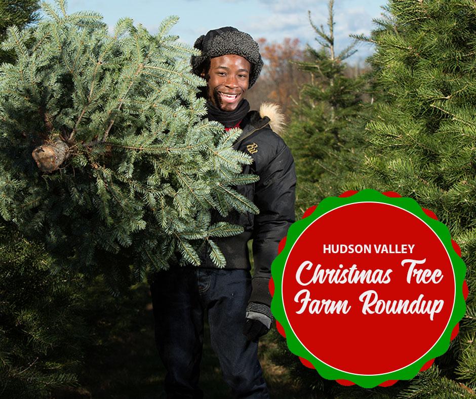 The Real Christmas Tree Farm: Christmas Tree Farms Of The Hudson Valley