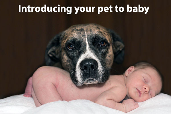 Tips for introducing your pet to your newborn safely.