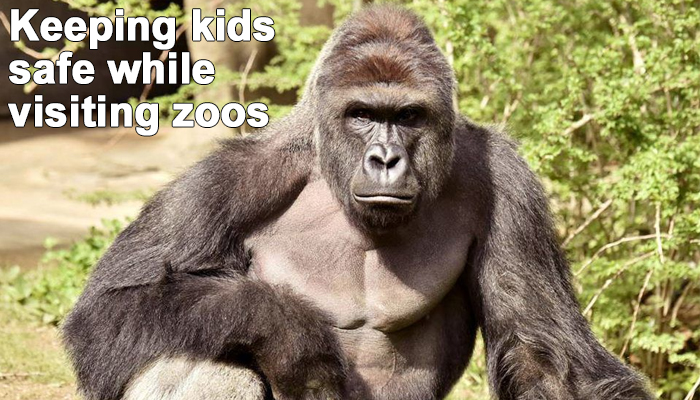 Tips to keep your kids safe while visiting hudson valley zoos