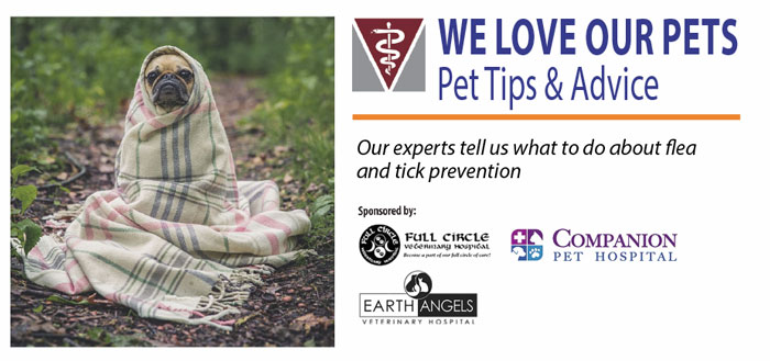 We love our pets - tips and advice