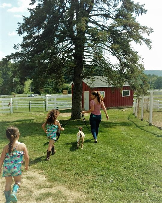 brewster, putnam county, hudson valley, places to go, things to do, family friendly, kid friendly, farm, petting zoo, animals, picnic, day trips