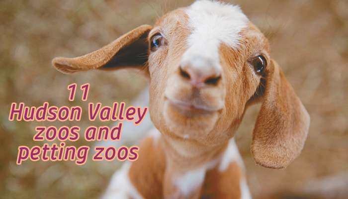 Hudson Valley's best zoos