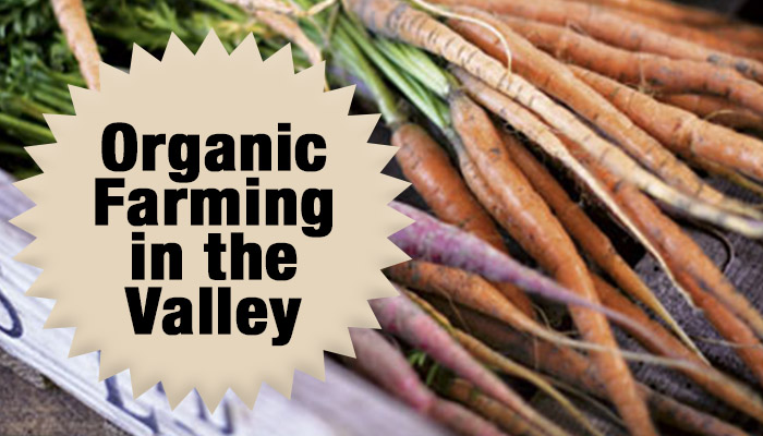 organic farming in the hudson valley new york