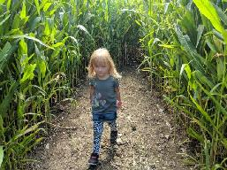 corn maze at Hurds