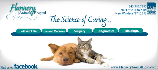 Looking for great care for your pet?